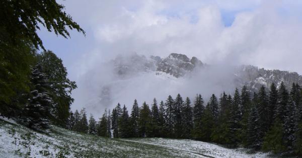 Reconnaitre les rôles de captation du carbone et de préservation de la biodiversité de la part des forêts