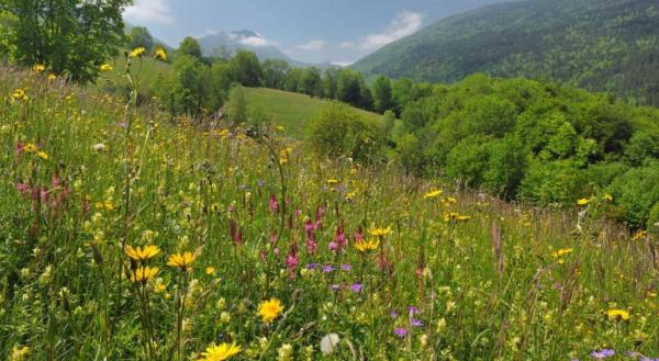 Combiner agriculture et protection de l'environnement